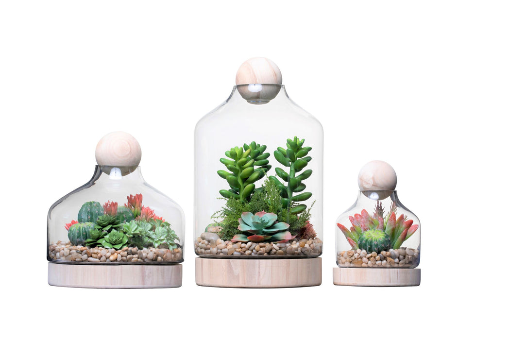 Chileno Terrarium Trio Arrangement   AR1337