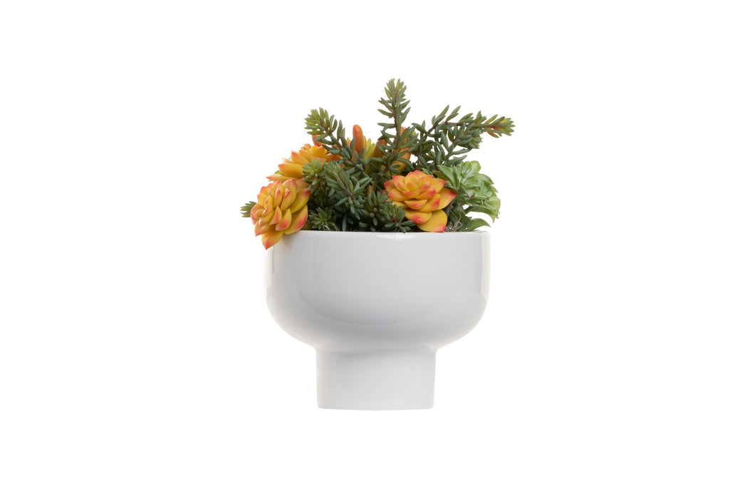 "5.25"" Orion Compote Bowl with Succulent Arrangement   AR1377"