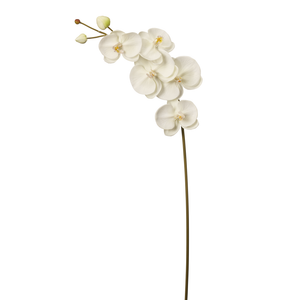 "42"" Phalaenopsis Medium FL1003"