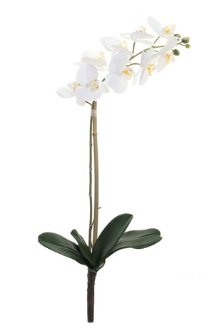 "24"" Real Touch Phalaenopsis- White     FL1026"