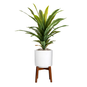 3' Draceana Plant in Tall Small Chandler Planter   PC1013