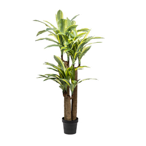 4' Dracaena Tree Yellow/Green Leaves  FP1057