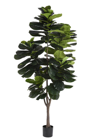 7' Fiddle Leaf Fig Tree     FP1074