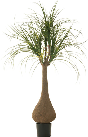 4' Ponytail Palm Tree FP1121