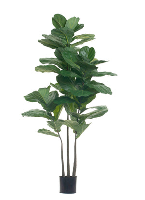 6' Fiddle Leaf Fig Tree FP1126