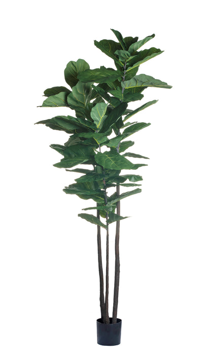 8' Fiddle Leaf Fig Tree    FP1127