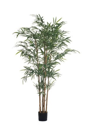 5' Royal Bamboo Tree FP1130