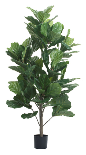 4' Fiddle Leaf Fig Tree FP1137