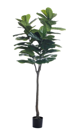 7' Fiddle Leaf Fig Tree    FP1146