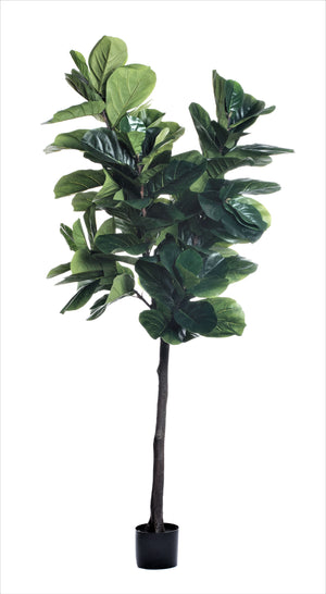 8' Fiddle Leaf Fig Tree   FP1147