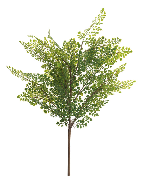 "24"" Maidenhair Fern    FR1019"