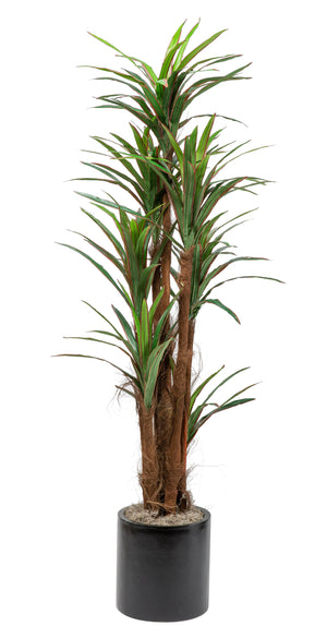 6' Fuzzy Trunk Dracaena in Small Black Zander Planter    PC1024BKZA