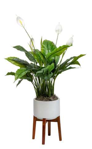 3.5' Peace Lilly (w/flowers) in Small Chandler Planter PC1048WHCH