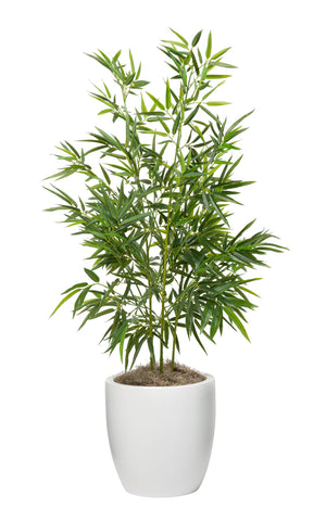 4' Bamboo Tree in White Hayden Planter PC1049WHHA