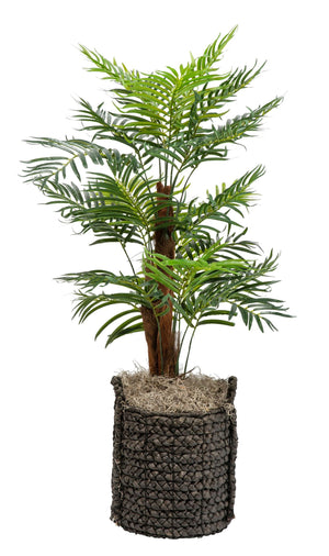 4' Phoenix Palm in Black Handled Basket PC1061BKBS