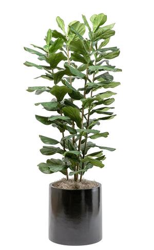 6' Column Fiddle Fig in Medium Black Zander Planter           PC1096