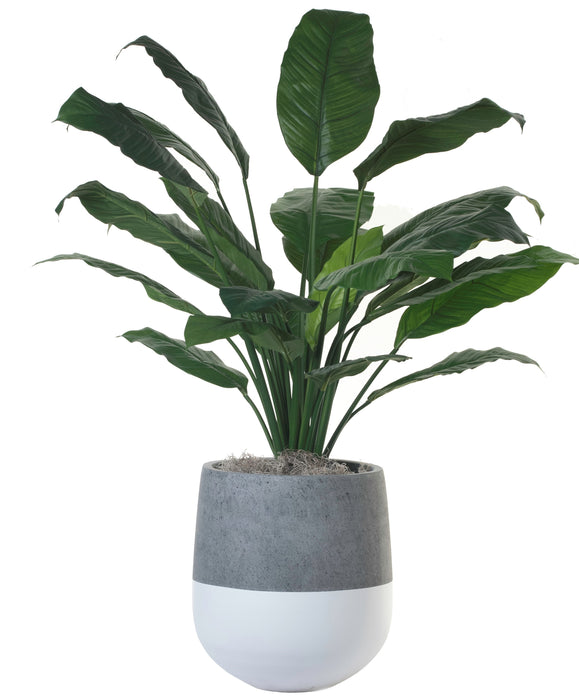 "3' King SpathIphyllum in 15"" White Emma Planter PC1110WEMD"