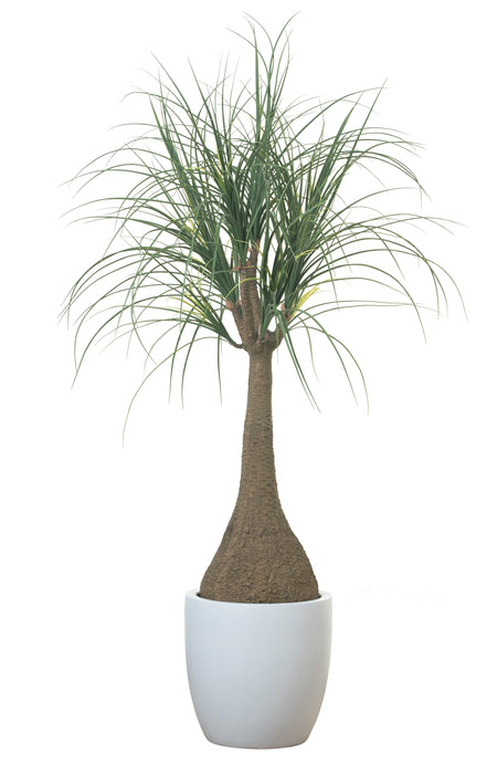 "4' Ponytail Palm in 13"" White Hayden PC1121BKHA"