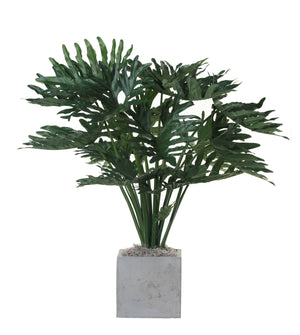 "3' Philodendron in 10"" Balboa Planter PC1142CTBA"