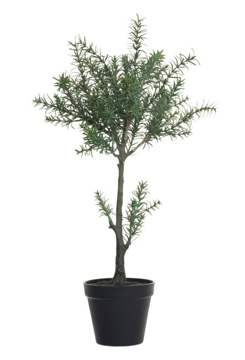 "21"" Potted Rosemary   PP1019"