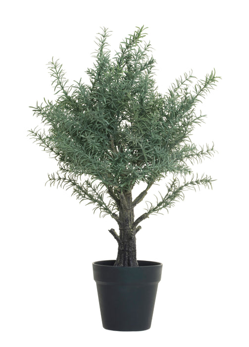 "24"" Potted Rosemary Tree   PP1022"