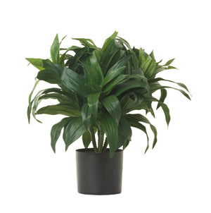 "14"" Potted Dracaena Bush PP1025"