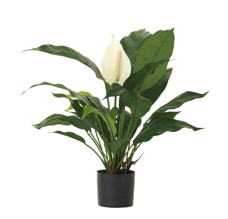 "24"" Potted Spathiphyllum Bush PP1026"