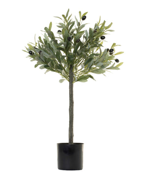 2' Olive Plant    PP1027