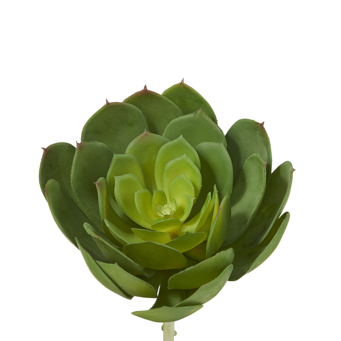 "8"" Green Lotus Succulent  SF1017"