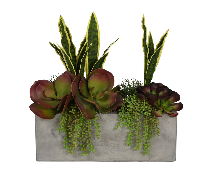 "21"" Balboa Concrete Planter with Succulent Arrangement   AR1069"