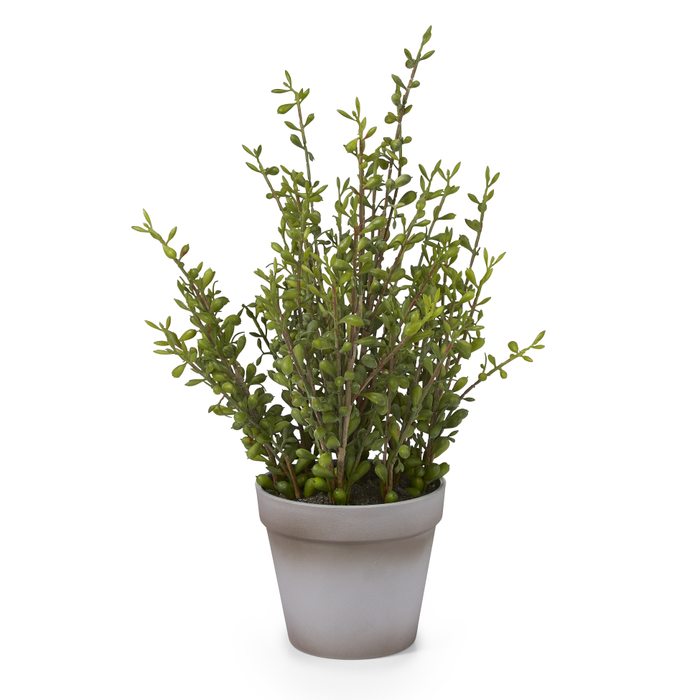 "15"" Potted Pearl Plant   PP1002"