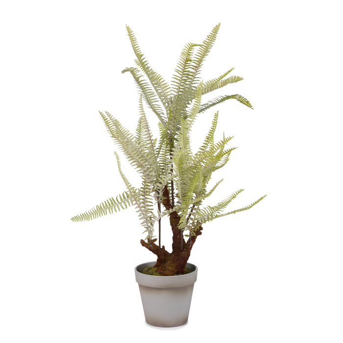 "24"" Potted Fern Plant   PP1003"