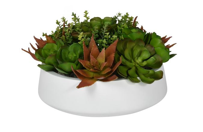Succulent Arrangement in Large Edison Bowl AR1031