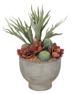 "9""W Concrete Compote Bowl with Staghorn Fern & Mixed Succulents AR1067"