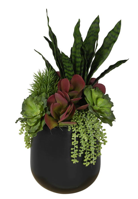 "11"" Abby Pot with Succulent Arrangement   AR1081"