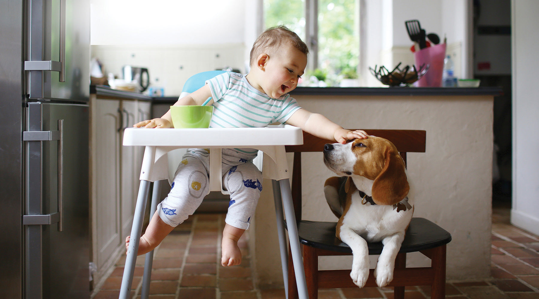 Baby sitting in a high chair and petting a dog