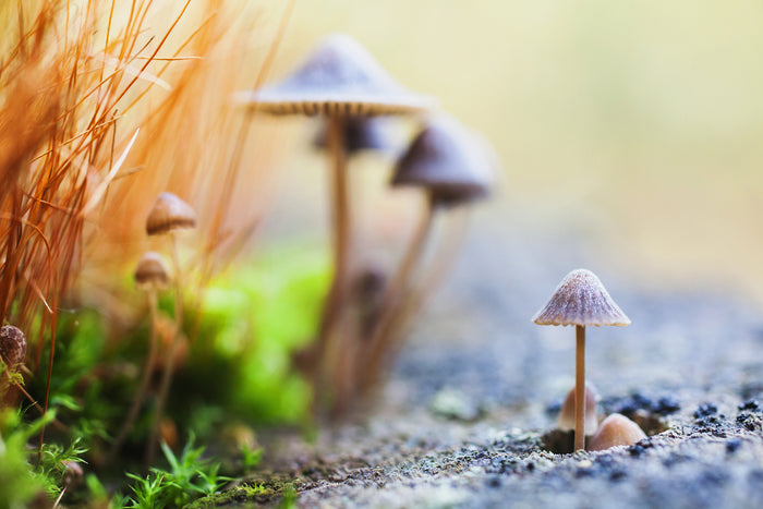 The Magic of Mushrooms can Change Your Mind