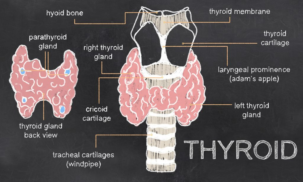 The Top 4 Essential Minerals for a Fully Functioning Thyroid