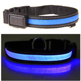 The Night Light Collar