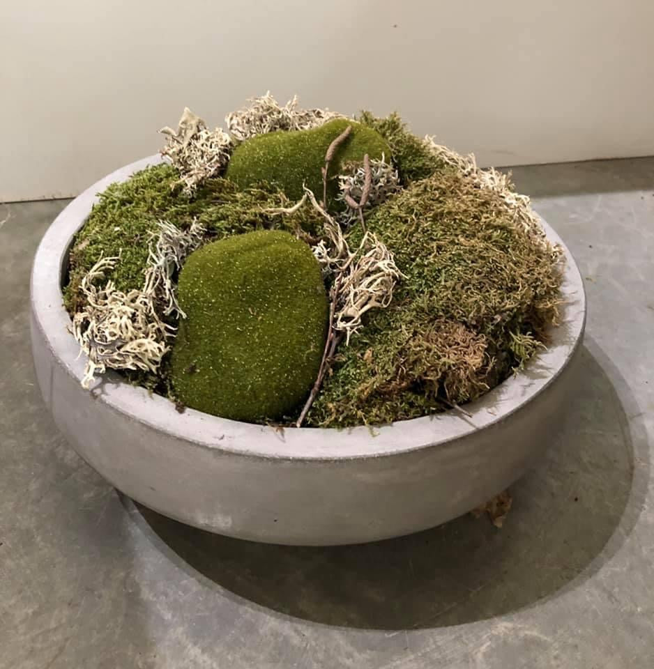 Preserved Moss Bowl in Concrete Planter
