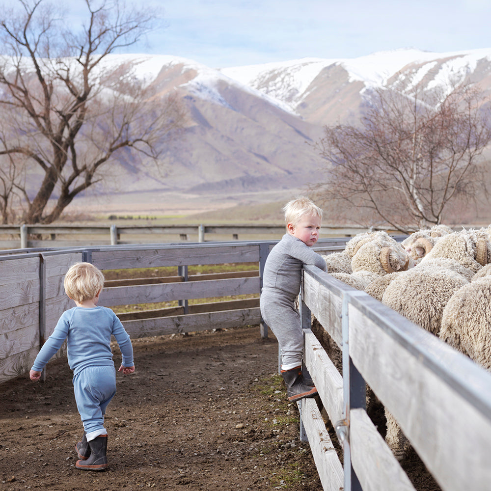 Why merino wool is getting more expensive