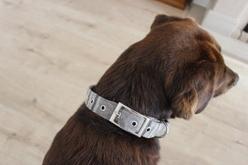 Cambridge Checked Dog Collar