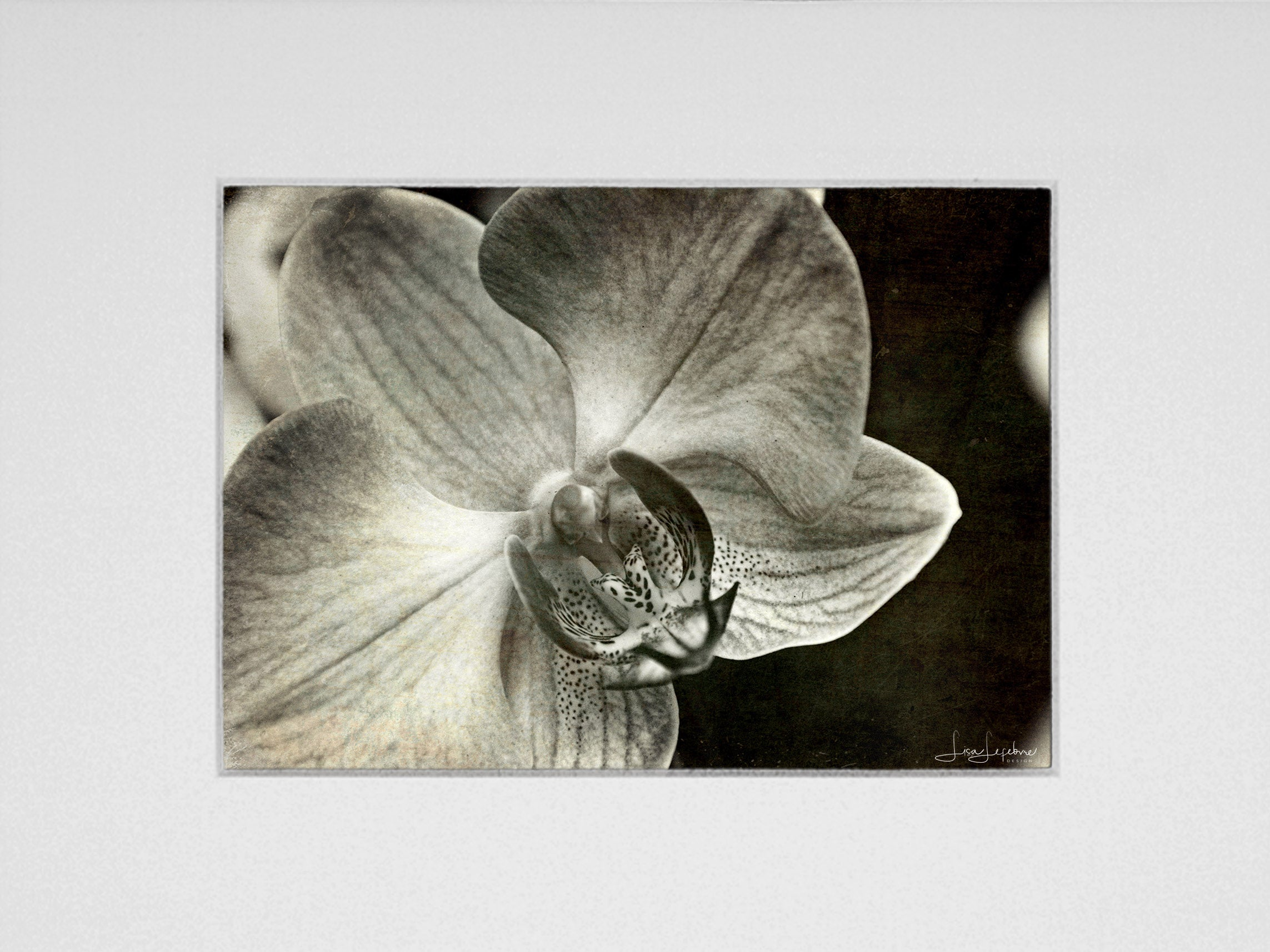 Orchid BW Print - Original Photographic Print