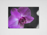 Purple Orchid Print - Original Photographic Print