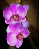 Painted Orchid Print - Original Photographic Print