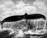 "A Whale's ""Tale"" First Print - Original Photographic Print"