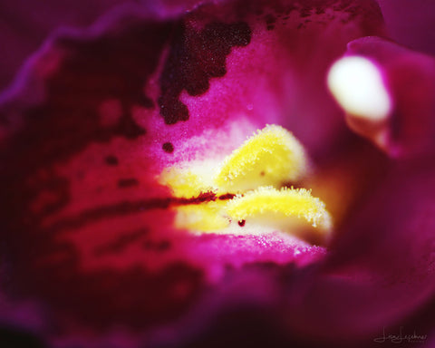 "Macro ""Purple"" Print - Original Photographic Print"