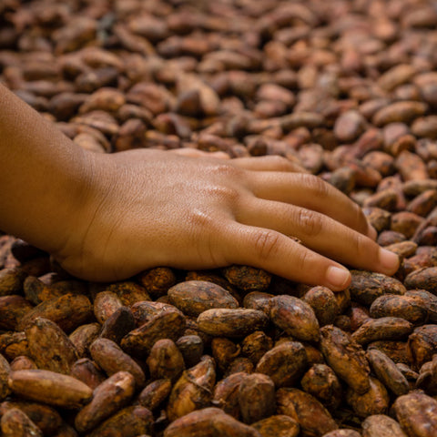 a hand on top of drying cacao beans