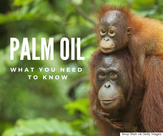 Palm Oil and Why We Don't Use it