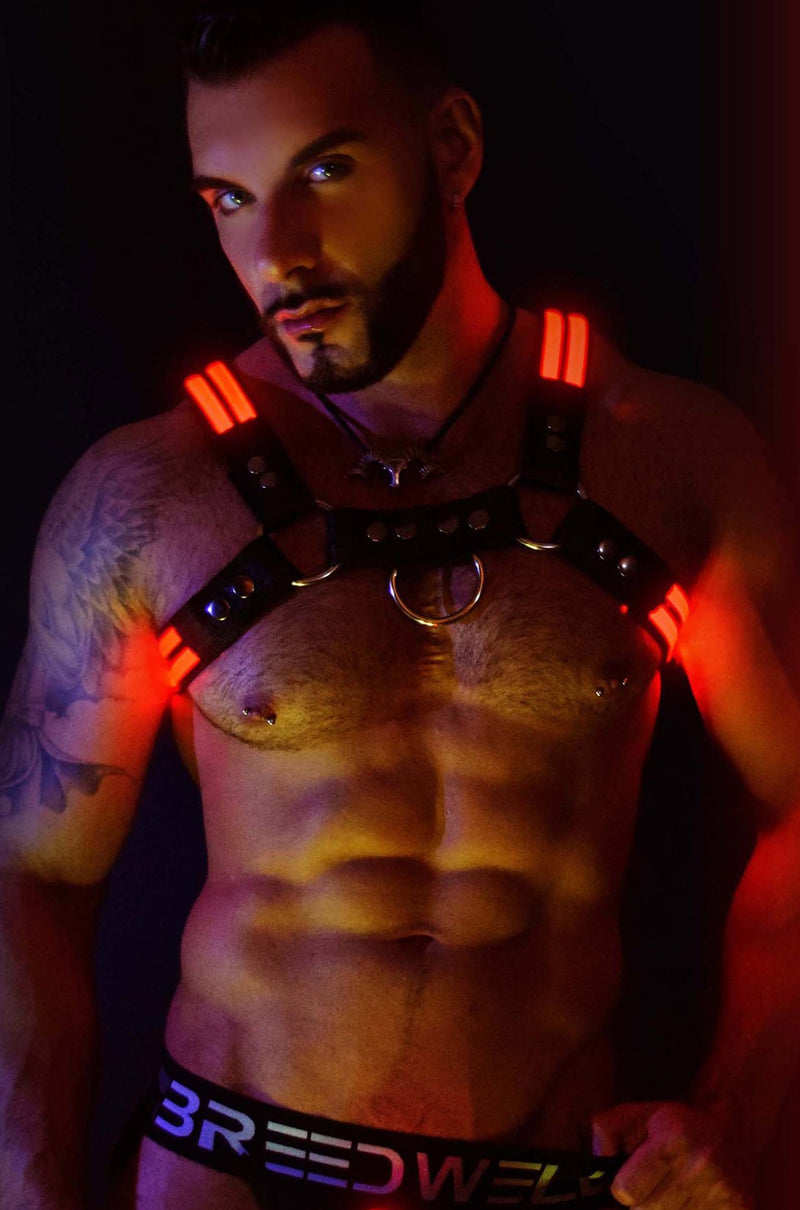RED GLOW BULLDOG HARNESS